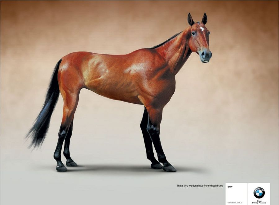 Name:  horse.jpg