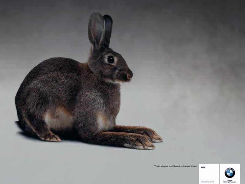 Name:  bunny.jpg Views: 581 Size:  55.3 KB