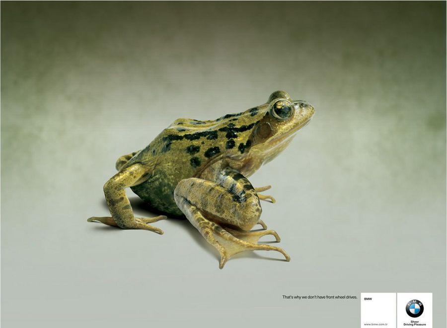 Name:  frog.jpg Views: 586 Size:  45.8 KB